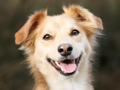 happy-dog-02