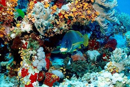 korall02 (1)