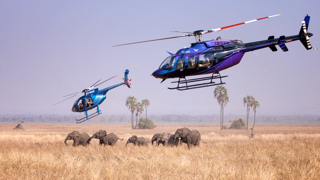 A-family-group-of-elephants-is-darted-from-the-air