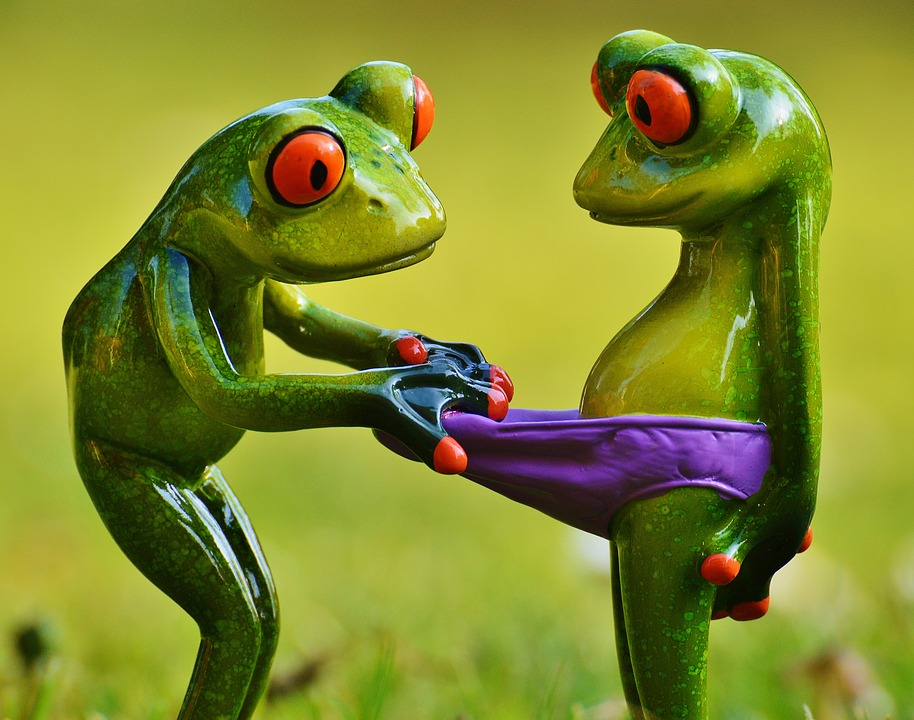 frogs-1347637_960_720
