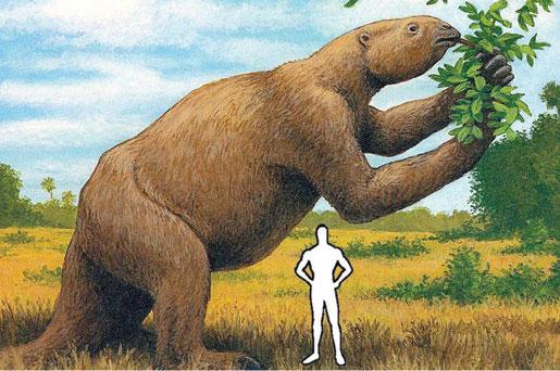Az óriáslajhár méretarányos fantáziarajza. A kép forrása: factzoo.com