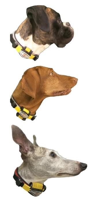 kutya5