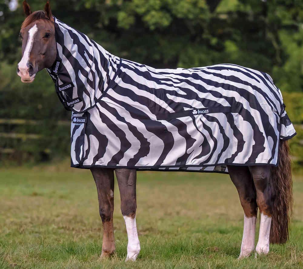 zebra ló